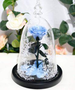 Rose Éternelle Belle Et La Bête